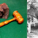 75 Millet gavel and tree