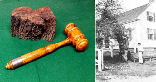 Millet gavel and tree